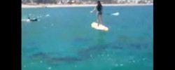 Video, Dolphins with SUP Boarders on Camps Bay Beach